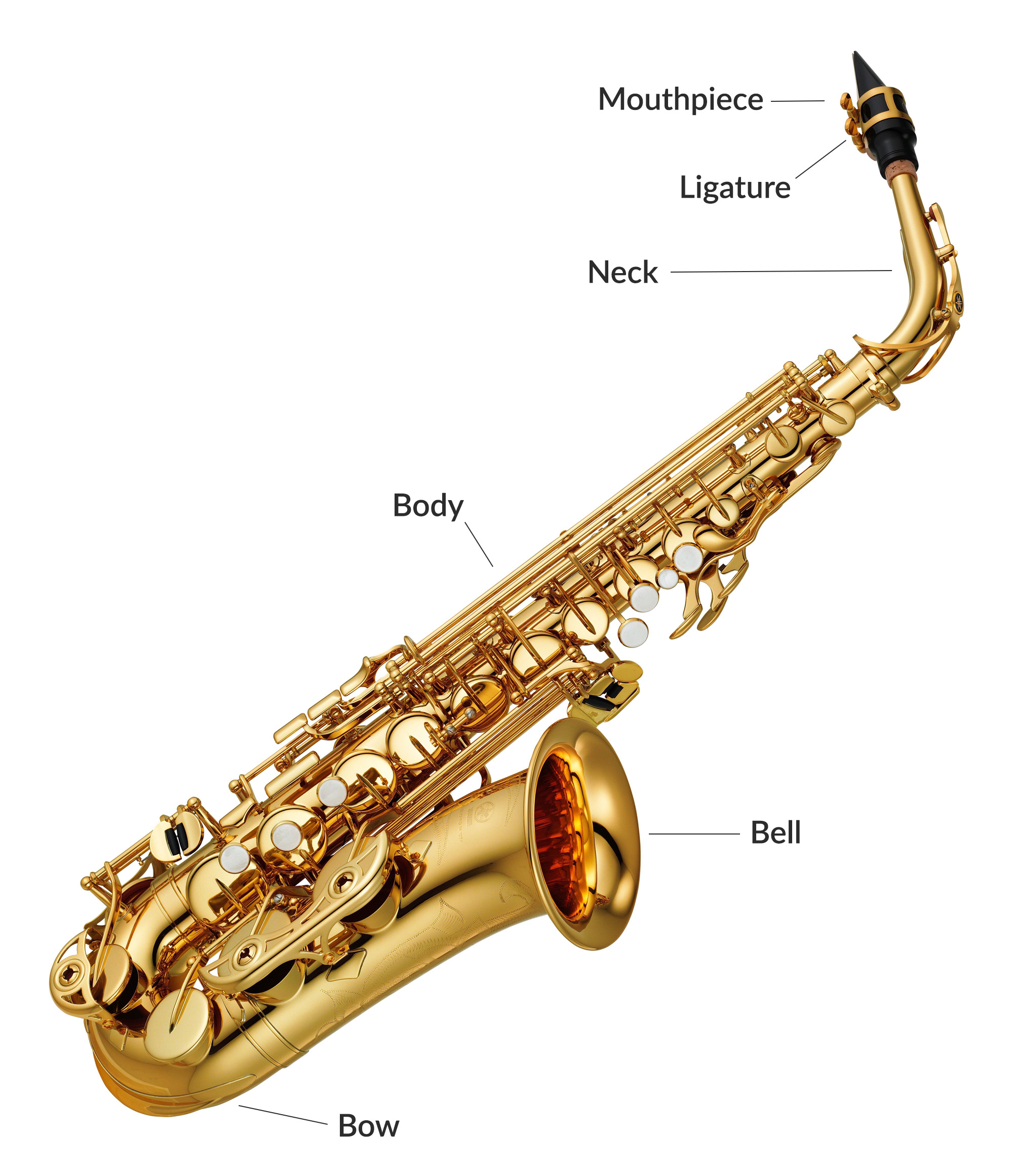 The different sections of an Alto Saxophone
